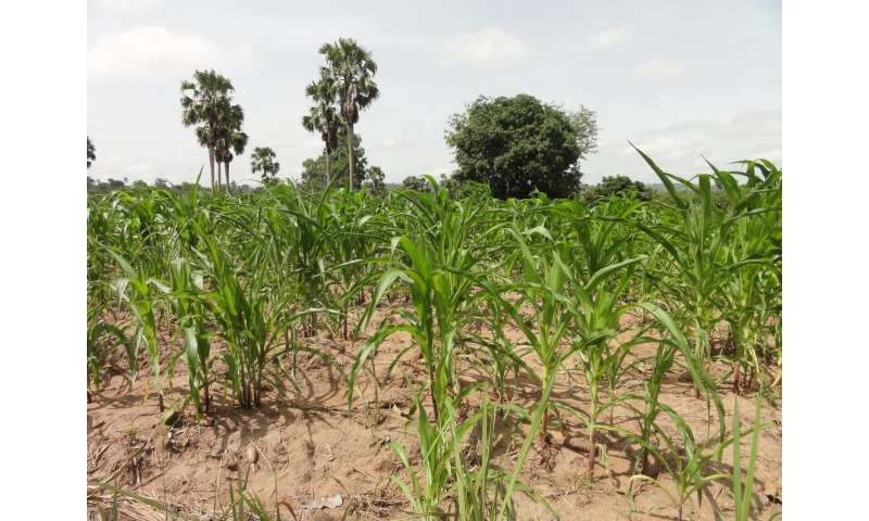 Even with maximized yields, sub-Saharan Africa won't grow enough grain in 2050