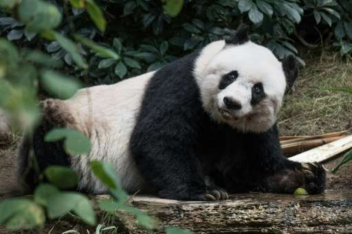 According to the Ocean Park Hong Kong theme park Jia Jia, the world's oldest giant panda in captivity, was put down after her he