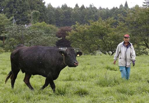 Cows in Fukushima radiation zone find new purpose: science
