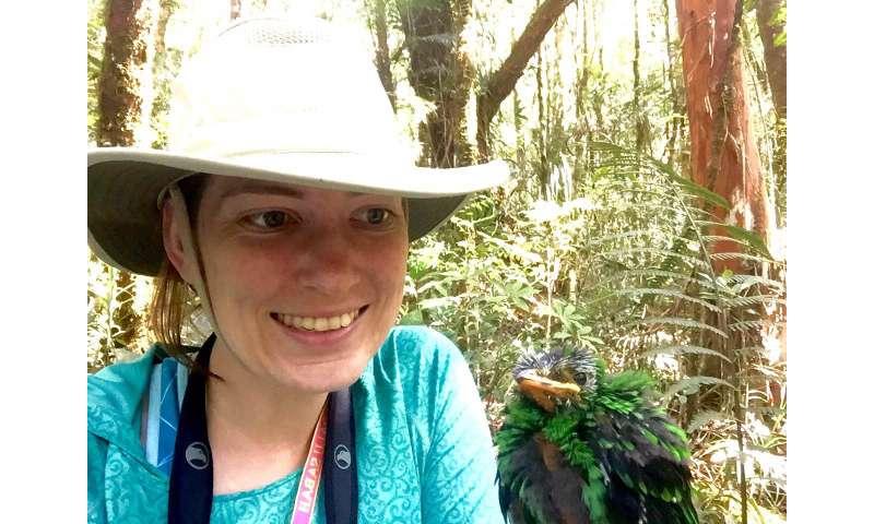 Research reveals trend in bird-shape evolution on islands