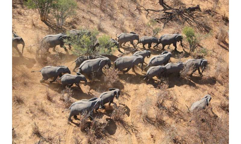 1fdccd6cb3711 Aerial surveys of elephants and other mammals may underestimate numbers