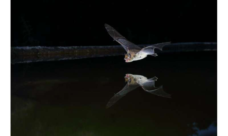 Climate change helps bats to spread their wings