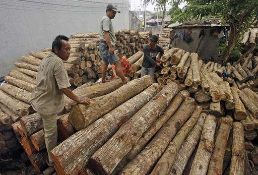 EU hopes licensing system will help save Indonesian forests