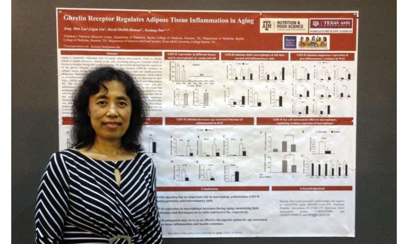 Study examines role of ghrelin receptor in fat tissue inflammation and insulin resistance