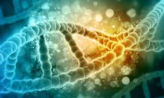 Breast cancer gene holds key to personalised medicine and new drug development