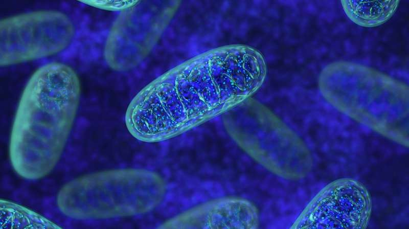 Newly discovered proteins may protect against aging's illnesses