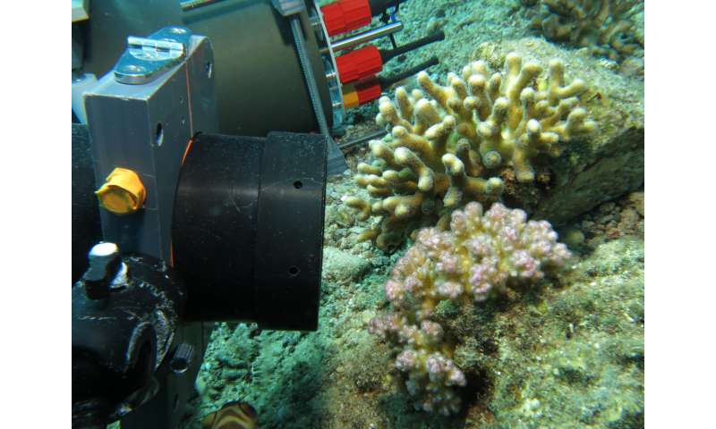 Researchers develop novel microscope to study the underwater world