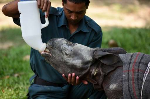 A 12-day-old baby rhinoceros is fed milk at the Centre for Wildlife Rehabilitation and Conservation (CWRC) in the Indian state o