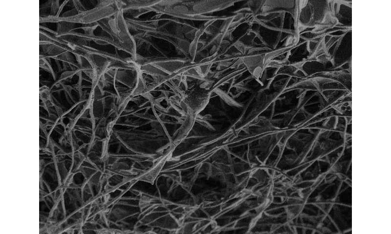 A 'bridge' of carbon between nerve tissues