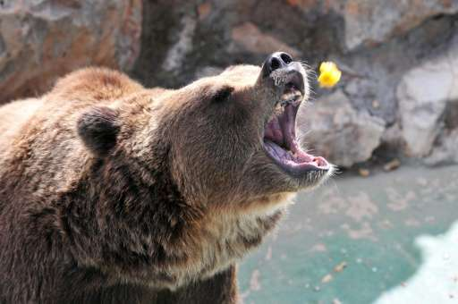 Poison Probe After Grizzly Bear Found Dead In Italy