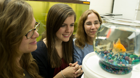 A clog-resistant filtration system inspired by filter-feeding fish