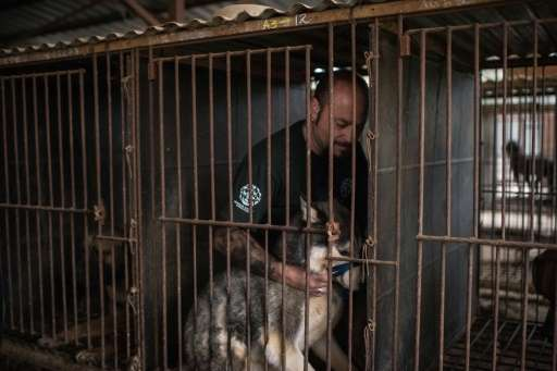 Adam Parascondola of Humane Society International comforts a dog during an operation to shut down a dog meat farm in Wonju