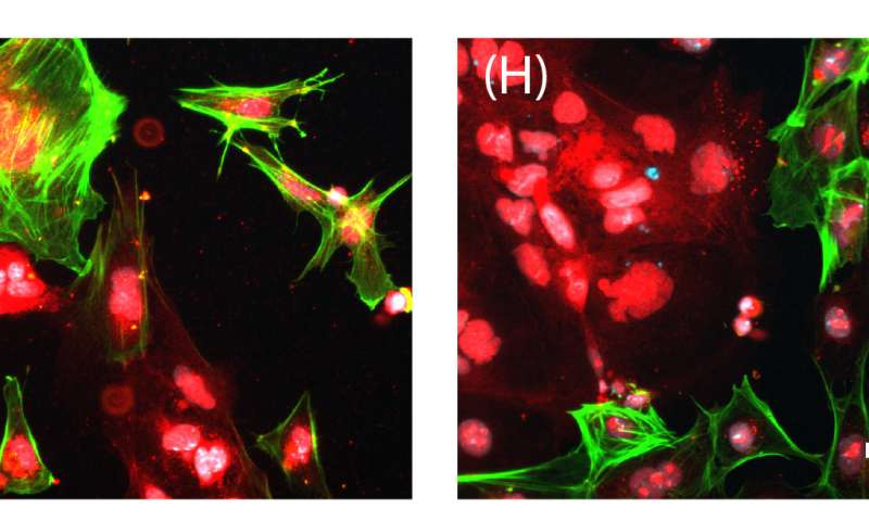 Advance could help grow stem cells more safely