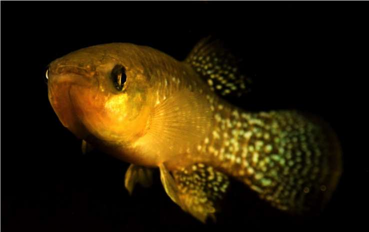 Against the tide: A fish adapts quickly to lethal levels of pollution