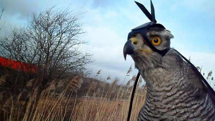 A hawk's-eye view of raptor hunting