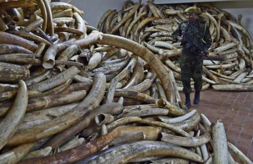 A Kenya Wildlife Services ranger walks through a secure ivory stock room in Nairobi on March 21, 2016