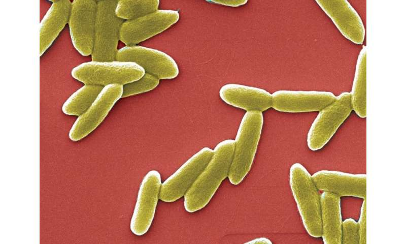 A lead to overcome resistance to antibiotics