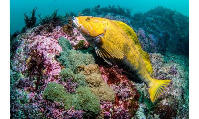 """All-female hybrid fish species """"uses"""" males for better genetics"""