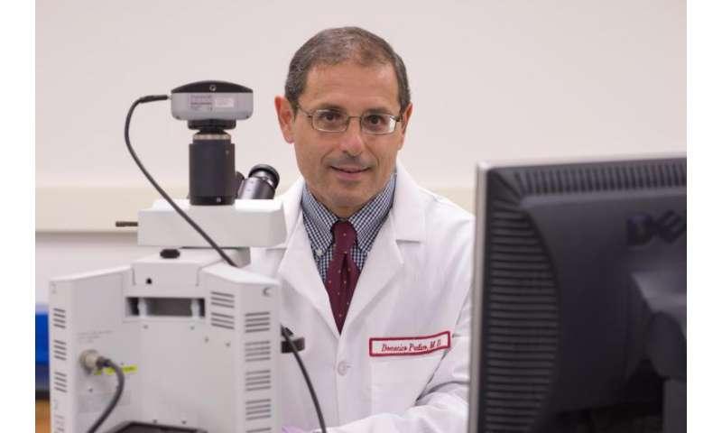 Altered circadian rhythm worsens Parkinson's disease, Temple researchers show