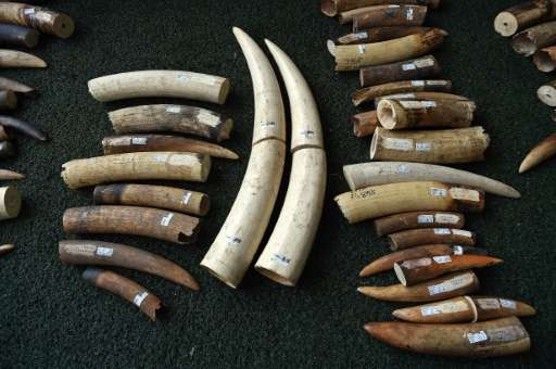 Although the ivory trade is banned in Vietnam, the country remains a top market for ivory products