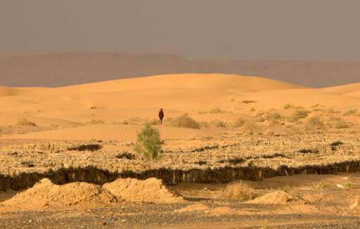 A man walks on dunes on October 26, 2016 near Morocco's southeastern oasis town of Erfoud, north of Er-Rissani in the Sahara Des