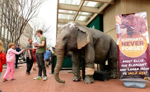 """A man with People for the Ethical Treatment of Animals (PETA) stands next to mechanical elephant """"Ellie"""" as he hands o"""