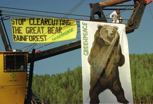 An activist chains himself to logging equipment as part of a protest by the international environmental group Greenpeace against