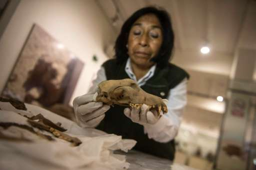 """An archaeologist works on the remains of a dog found at an archaeologist sites at the """"Parque de las Leyendas"""" (Park o"""