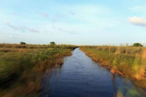 A National Wildlife Refuge in the Florida Everglades