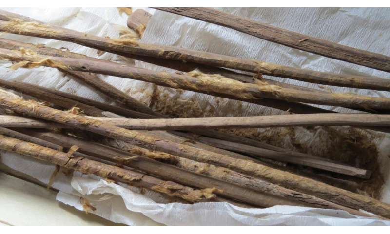 Ancient feces provides earliest evidence of infectious disease being carried on Silk Road