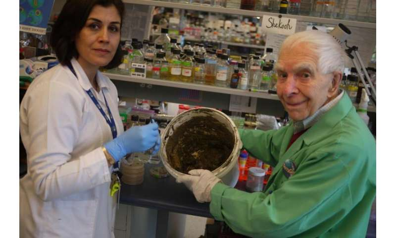 Ancient medicinal clay shows promise against today's worst bacterial infections