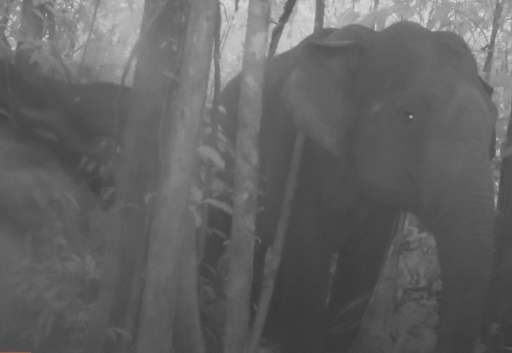 An elephant herd roaming through Cambodia's biggest forest sanctuary is seen in a rare footage caputred by by Conservation Inter