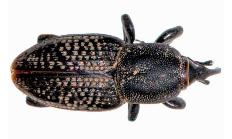 A new resource to help manage billbugs in turfgrass