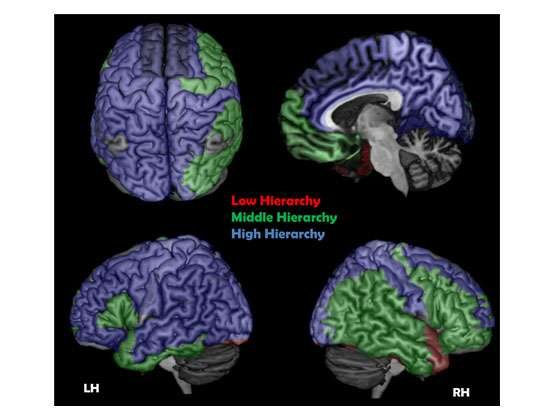 A new study looks for the cortical conscious network