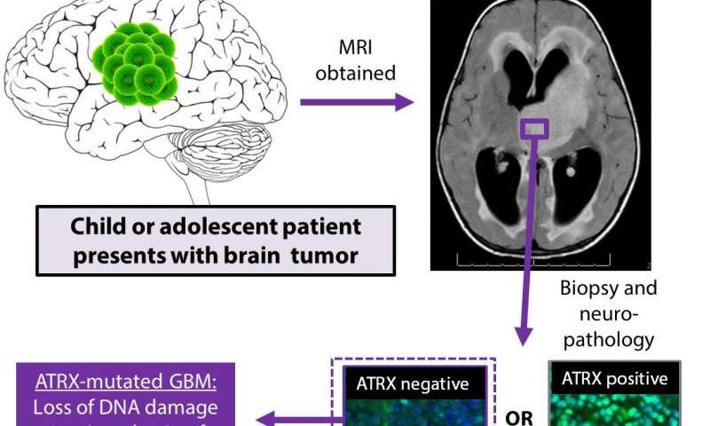 A new weapon in the fight against children's brain tumors developed at U-M