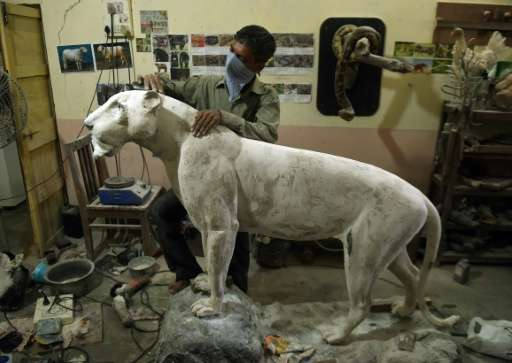 An Indian craftsman works on a sculpture of a leopard in the taxidermy centre at the Sanjay Gandhi National park in Mumbai