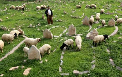 An Iraqi shepherd herds sheep in a cemetery on the banks of the Tigris River in the village of Wana, some 10 kms south of the Mo