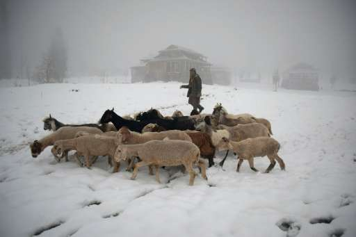 A Pakistani Kashmir resident walks with his livestock in the snow-covered Neelum Valley in Pakistan-held Kashmir