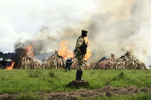 A ranger stands in front of burning ivory stacks at the Nairobi National Park on April 30, 2016