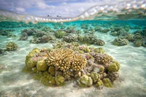 A study about the difference between a jump in 1.5 C and 2 C global temperature also looked at coral reefs, and found that warmi