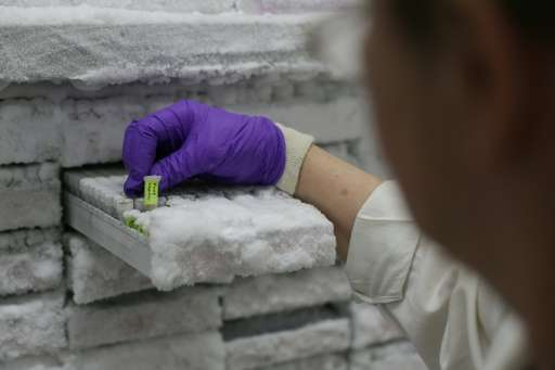 A technician picks up a sample of frozen DNA from Ficus hispida fig tree at the Jodrell Science laboratory at Kew Gardens on May
