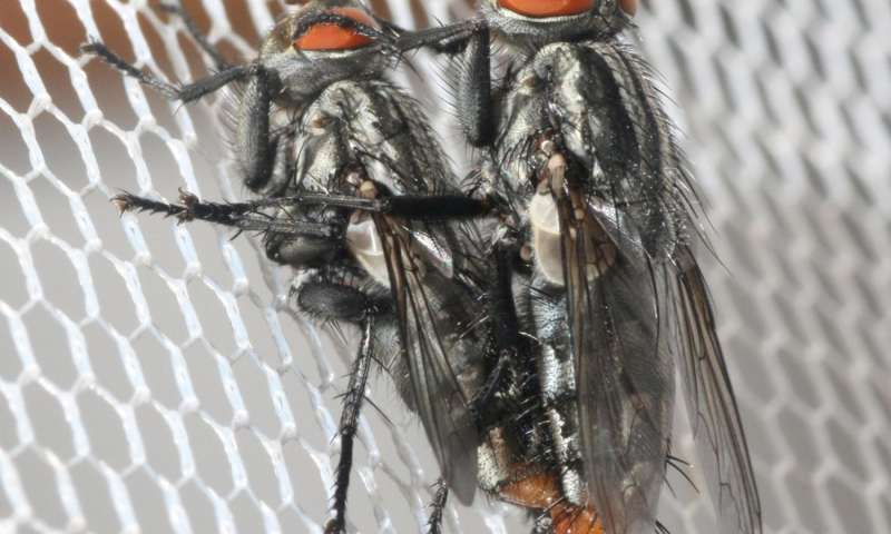 At the insect singles bar, cicadas provide the soundtrack