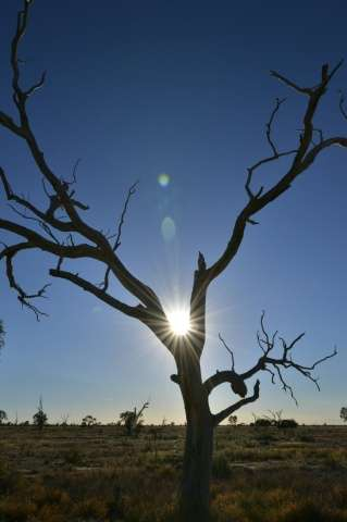 Australia experienced its three warmest springs on record between 2013-15 - spring is the bushfireseason when temperature and r