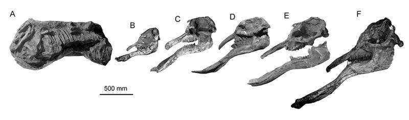 A weird combination of Deinotherium and Platybelodon- Elephantiformes without ivories