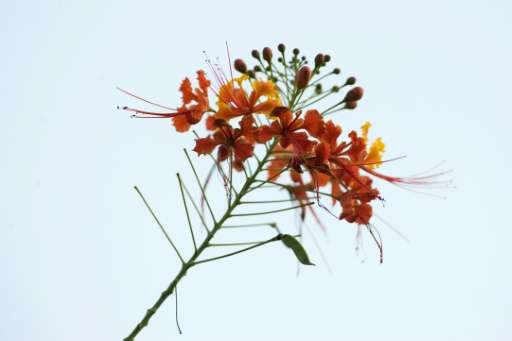 A wild flower is see in the mountains of Cali, Colombia, which has the second largest biodiversity in the world