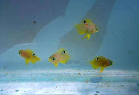 Baby fish are comforted by the presence of large marine predators