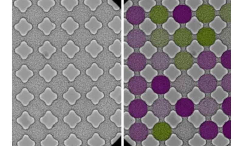 Bacteria streaming through a lattice behave like electrons in a magnetic material