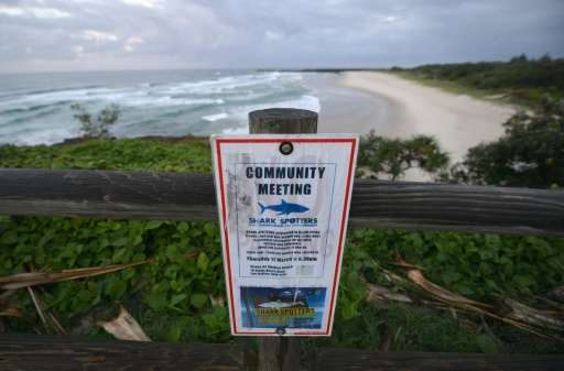 Ballina's Lighthouse Beach is in a region that has become known as a shark hotspot after a spate of encounters over the past yea