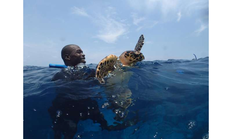Belize's Glover's Reef providing refuge for new generation of sea turtles