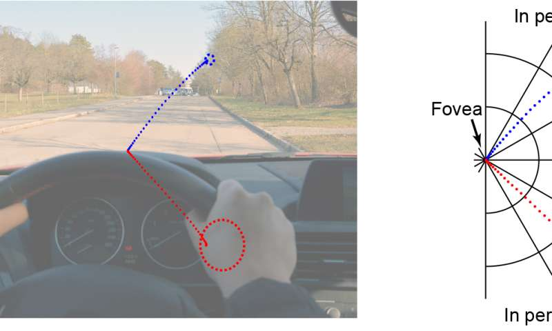 Bifocals in the brain: Visual information from near and far space processed with differing degrees of acuity